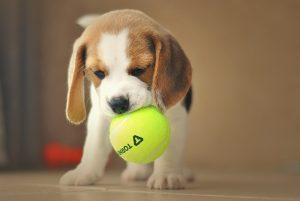 blog beagle